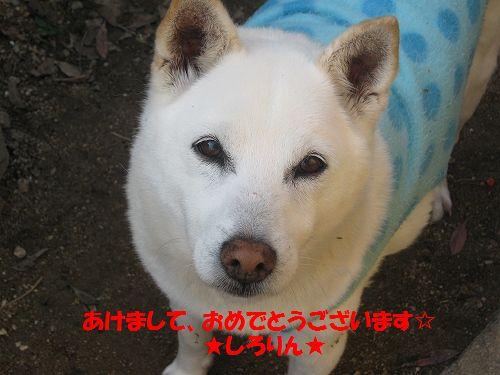 109_20130101175703.jpg