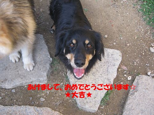 111_20130101175702.jpg