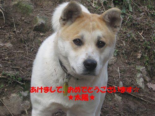 116_20130101175701.jpg