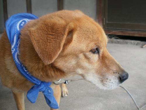 2012.05.30考える犬