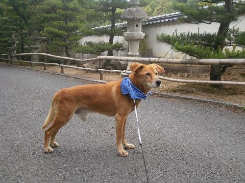 2012.05.30お寺の参道