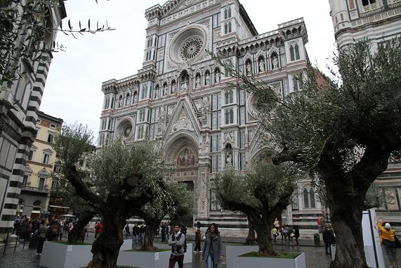 olive_20121117163728.jpg