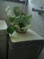 2012.05.12花