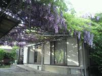 2012.05.11ふじ