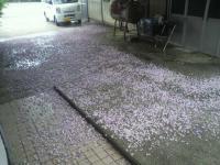 2012.05.16ふじ (1)1