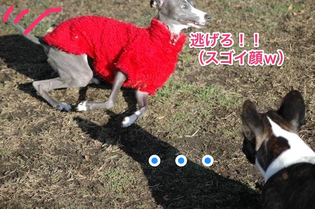 DSC_0019_1.jpg
