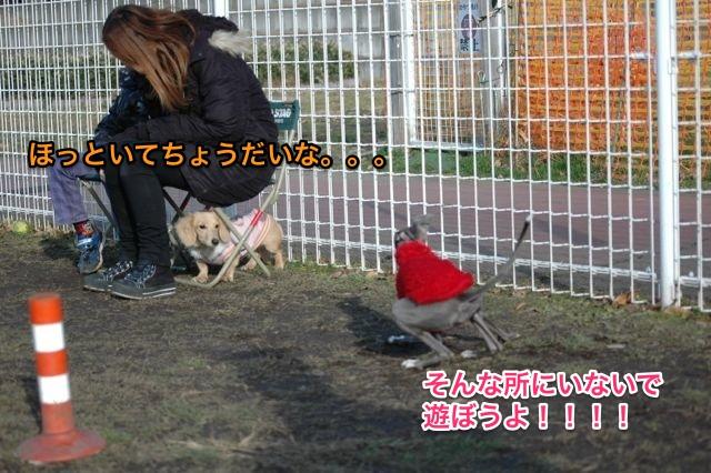 DSC_0034_1.jpg
