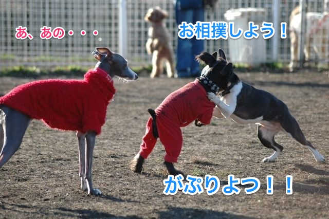DSC_0062_1.jpg