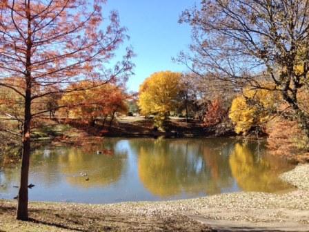 徒歩1分の公園の紅葉