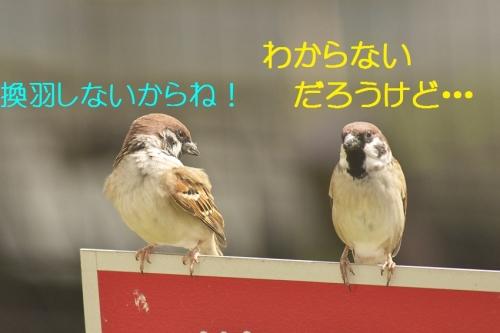030_201410312109363ec.jpg