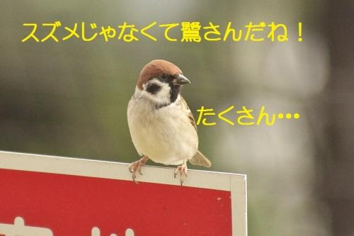 030_2014111721301067e.jpg