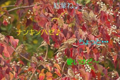 040_20141130195219245.jpg