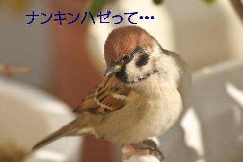 050_20141127221919bd9.jpg