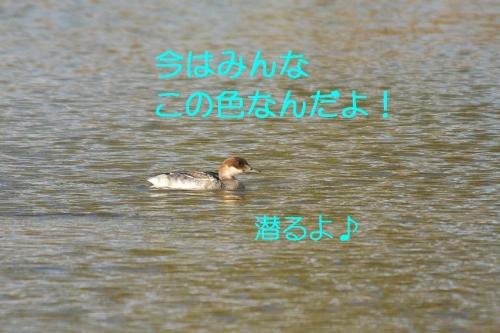 060_20141123131443be6.jpg