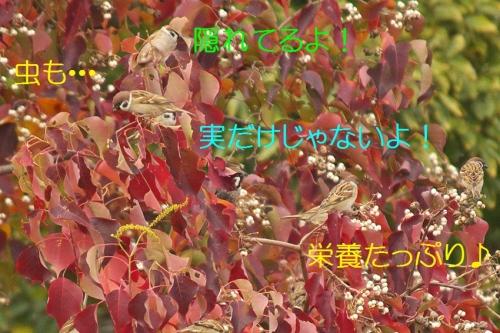 060_20141130195324a4f.jpg