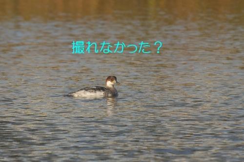 080_201411231314492d3.jpg