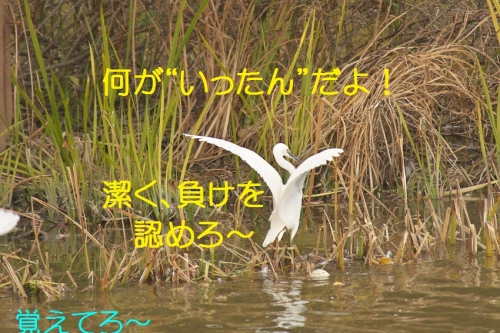 080_2014112520413772c.jpg