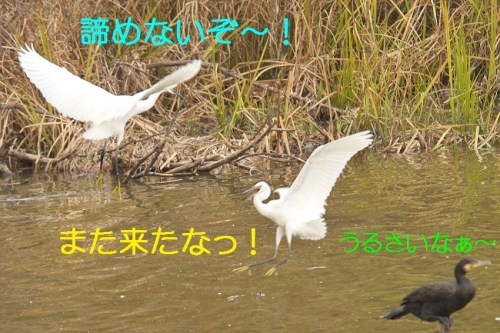 100_20141125204304d3c.jpg