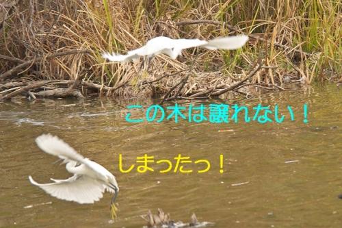 110_2014112520430548a.jpg