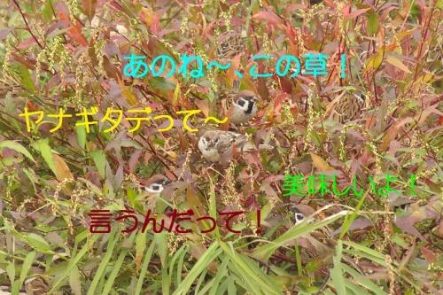 110_20141130195334820.jpg