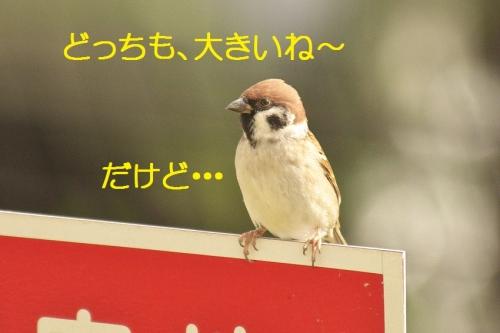 120_20141117213157d85.jpg
