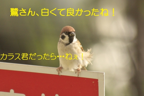 130_201411172131594b8.jpg