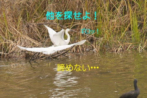 130_20141125204306e96.jpg