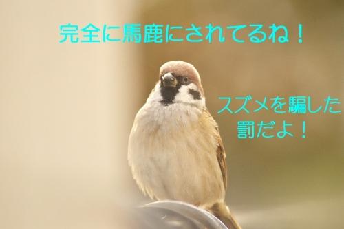 150_201411231318378f0.jpg
