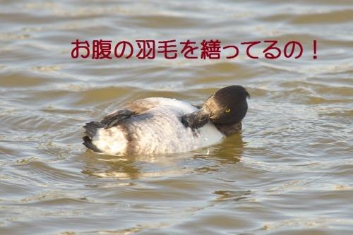170_2014112313191551c.jpg