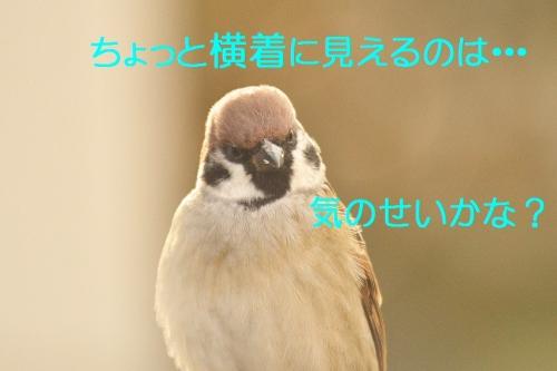 190_2014112313191842b.jpg