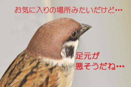 200_20141125204754ea2.jpg