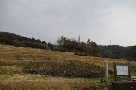 久留女木の棚田 8