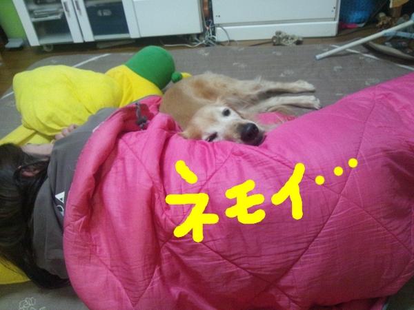 1_20121223024253.jpg