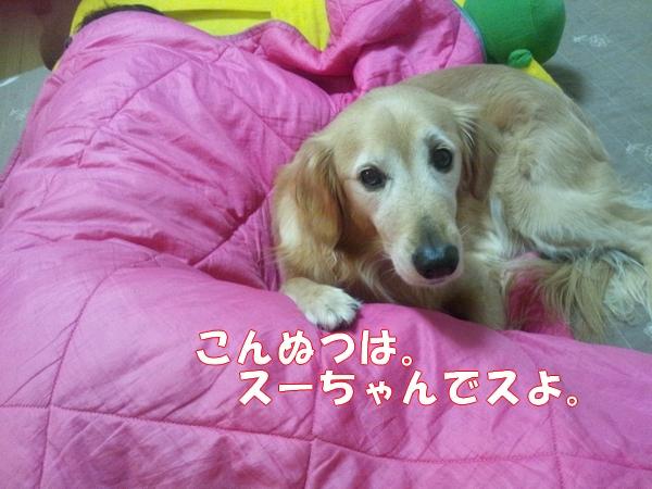 2_20121223024255.jpg