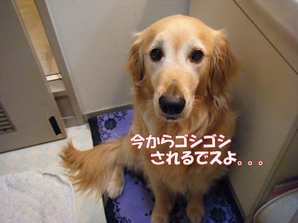 DSCF0006_20120616005052.jpg