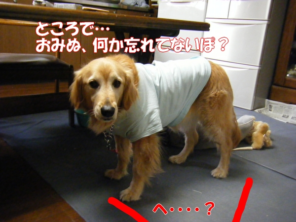 DSCF1006_20120528005311.jpg