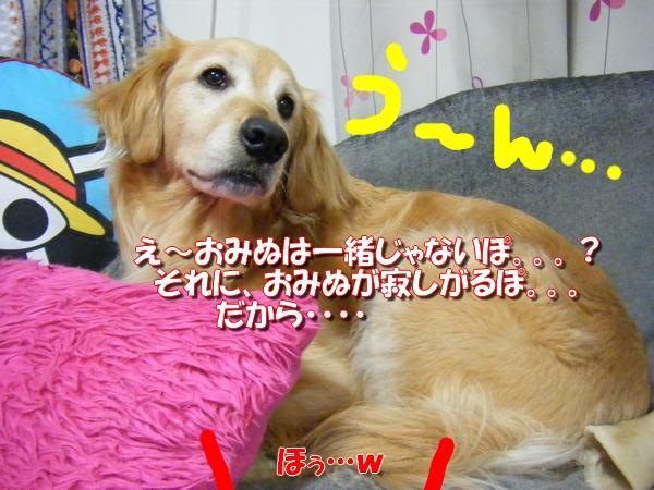 DSCF1030_20120603010348.jpg