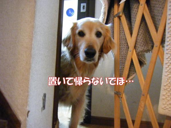 DSCF1048_20120611002618.jpg