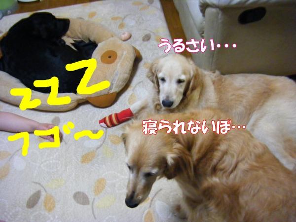 DSCF1049_20120610005654.jpg