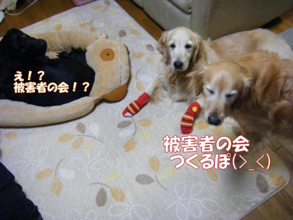 DSCF1051_20120610005653.jpg