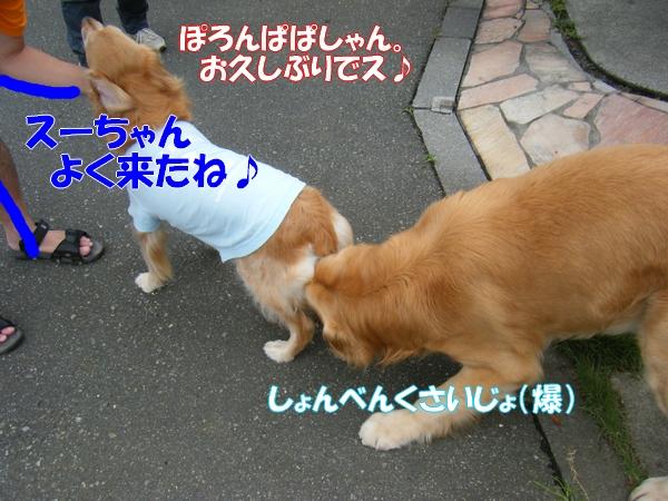 DSCF4003_20120622002341.jpg