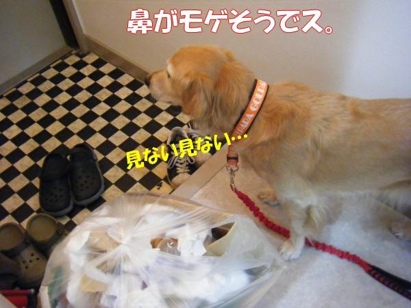 DSCF4007_20121102004902.jpg