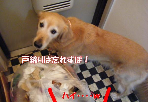 DSCF4012_20121102004901.jpg