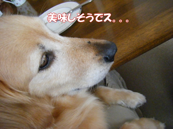 DSCF4045_20120622002421.jpg