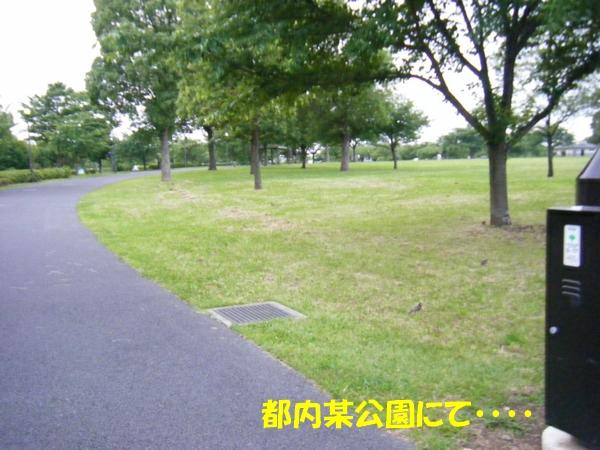 DSCF4110_20120627004849.jpg