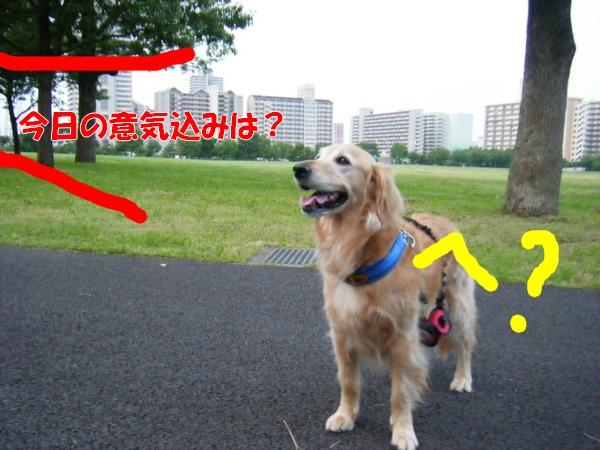 DSCF4114_20120627004847.jpg