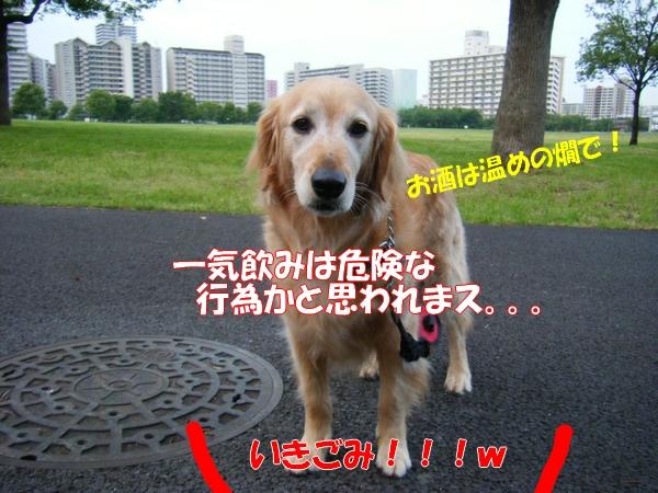 DSCF4118_20120627004933.jpg