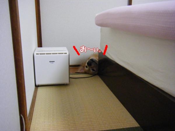 DSCF6008_20120720003119.jpg