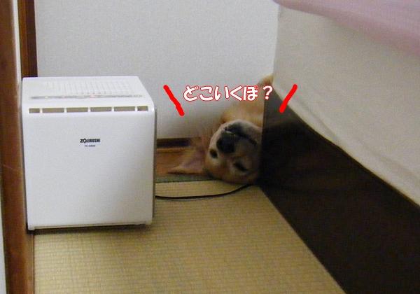 DSCF6010_20120720003118.jpg
