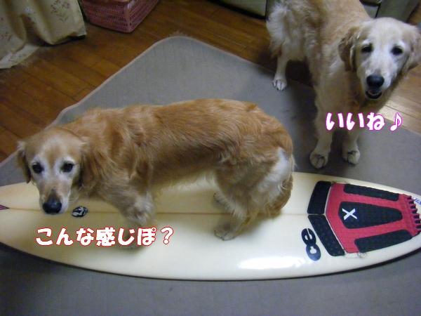 DSCF6035_20120722000316.jpg